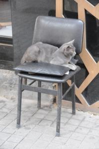 Un gatto comodamente seduto davanti a un negozio