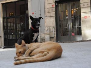 Cani e gatti di strada